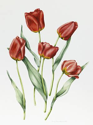Darwin Painting - Red Darwin Tulips by Sally Crosthwaite