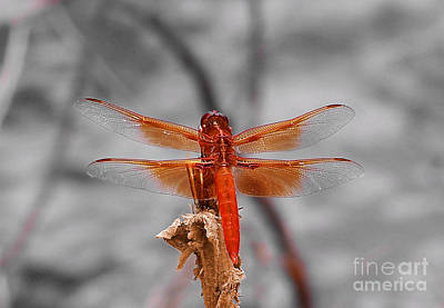 Photograph - Red Dragon by Dan  Dickerson
