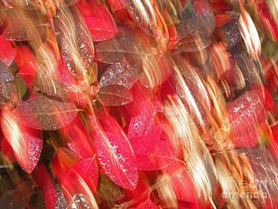 Avant Garde Photograph - Red Fall Leaves 10 by Tony Cordoza