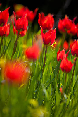 Red Field Print by Emmanouil Klimis