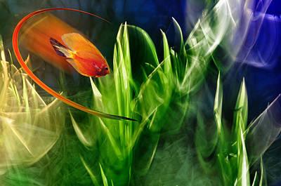 Red Fish In An Aquarium Print by   larisa Fedotova