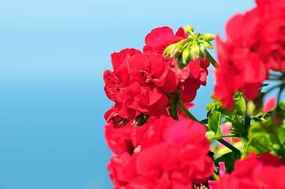 Red Flowers Print by Paul Van Baardwijk