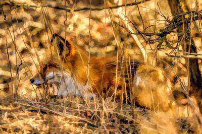 Fox Digital Art - Red Fox 2 by Geraldine Scull
