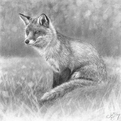 Red Foxes Drawing - Red Fox In Meadow by Chris Mosley