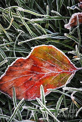 Crystal Photograph - Red Frosty Leaf On Frozen Ground by Elena Elisseeva