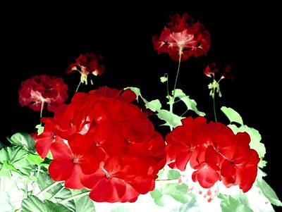 Red Geraniums Print by Will Borden