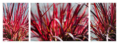 Turf Photograph - Red Grass Trio - Featured 3 by Alexander Senin