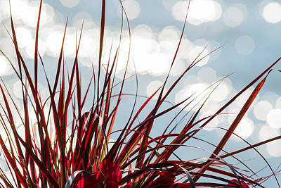Turf Photograph - Red Grass White Light 2 - Featured 3 by Alexander Senin
