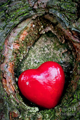 Wood Photograph - Red Heart In A Tree Hollow by Michal Bednarek