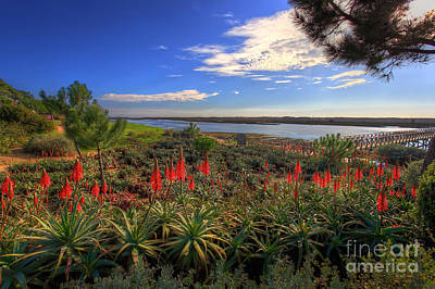 Red Hot Aloes Print by English Landscapes