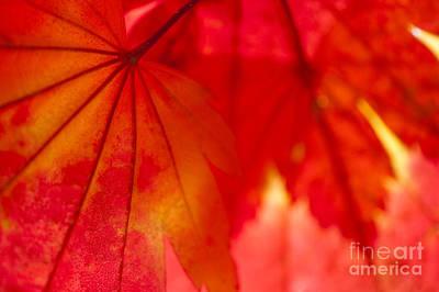 Gilbert Photograph - Red Hot by Anne Gilbert