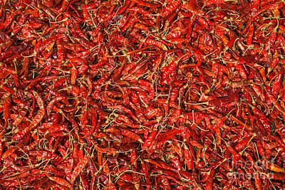 Chilli Photograph - Red Hot Chillies by Regina Koch