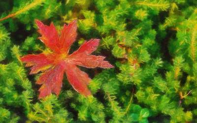 Red Leaf On Green Moss Print by Dan Sproul