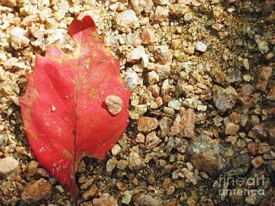 Red Leaf Print by Venus