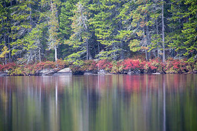 Red Leaved Shrubs Dot A Shoreline Print by Robbie George