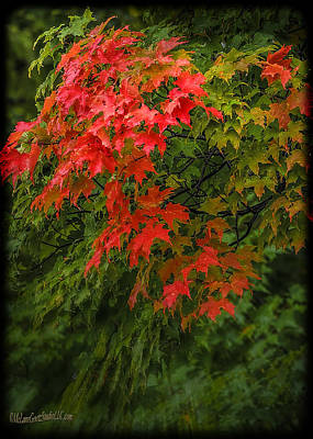 Flora Photograph - Red Leaves Of Fall by LeeAnn McLaneGoetz McLaneGoetzStudioLLCcom