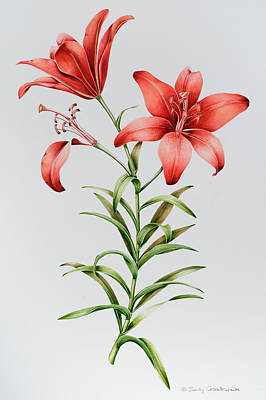 Lilies Painting - Red Lilies by Sally Crosthwaite