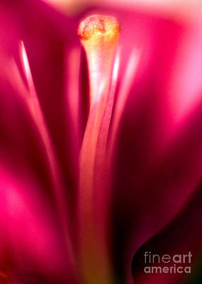 Pink Orchid Petals Photograph - Red Lily  by Stelios Kleanthous