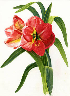 Floral Watercolor Painting - Red-orange Amaryllis by Sharon Freeman
