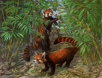 Alluring Painting - Red Pandas by ACE Coinage painting by Michael Rothman