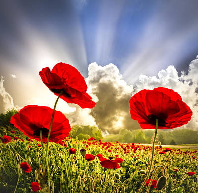 Smokey Sky Photograph - Red Poppies by Debra and Dave Vanderlaan