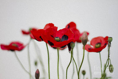 Friendly Digital Art - Red Poppy by Clare Bambers