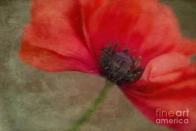 Blume Photograph - Red Poppy by Priska Wettstein