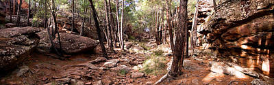 Teruel Photograph - Red Rock Pine Forest by Weston Westmoreland