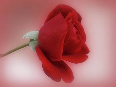Red Rose For You Print by Sandy Keeton