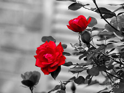 Red Photograph - Red Roses by Jai Johnson
