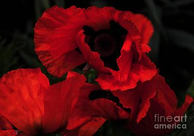 Red Ruffles Print by Kathleen Struckle