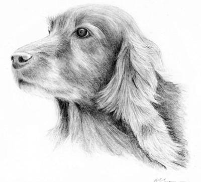 Red Setter Print by Mary Mayes