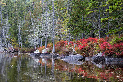 Red Shrubs Line A Lakes Shore Print by Robbie George