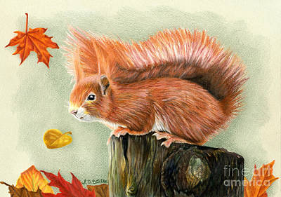 Falling Drawing - Red Squirrel In Autumn by Sarah Batalka