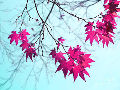 Midday Photograph - Red Star Clusters by Irina Wardas