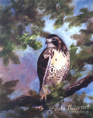 Brenda Brown Art Painting - Red Tailed Hawk by Brenda Thour