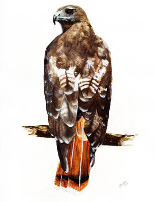 Buzzard Painting - Red Tailed Hawk by Carlo Ghirardelli
