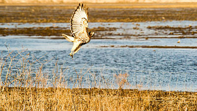 Red Tail Hawk Photograph - Red Tailed Hawk Launching Into Flight by Douglas Barnett