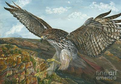 Red Tail Hawk Painting - Red-tailed Hawk by Tom Blodgett Jr