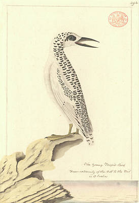 Red-tailed Tropicbird Print by Natural History Museum, London