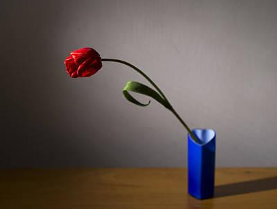 Red Tulip Print by Ivan Vukelic