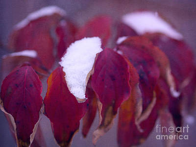 Red Velvet In Winter Print by Irina Wardas