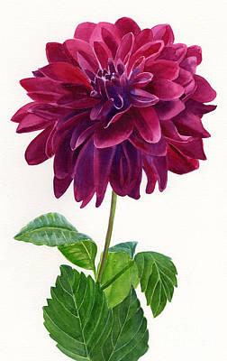 Red Violet Dahlia Blossom Original by Sharon Freeman