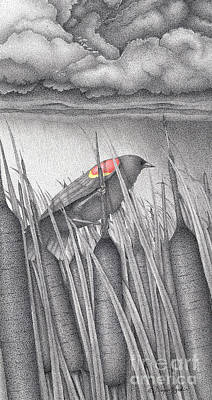 Stormy Weather Drawing - Red-winged Blackbird by Wayne Hardee