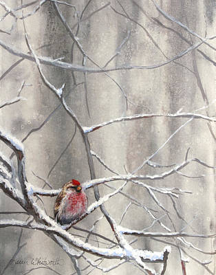 Crossbill Painting - Redpoll Eyeing The Feeder - 1 by Karen Whitworth