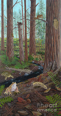 Redwood Forest Print by Carlyn Iverson