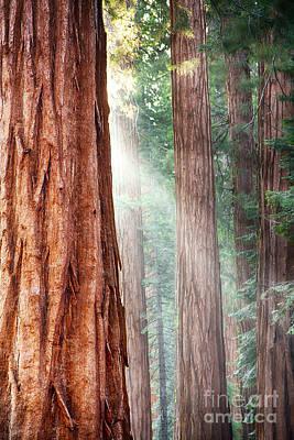 Redwoods In Yosemite Print by Jane Rix