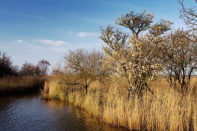 Reed Beds In Winter Print by Bob Gibbons