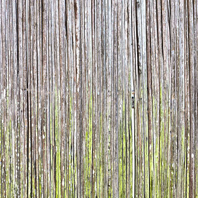 Algae Photograph - Reeds Background by Tom Gowanlock