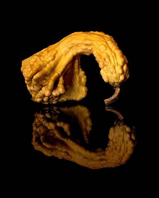 Introspection Photograph - Reflecting Gourd by Jim Hughes
